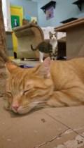 <b>Adopt Me:</b> Baxter loves his afternoon naps