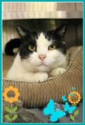 <b>Adopt Me:</b> Bella loves to cuddle but needs her alone time