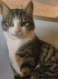 <b>Adopt Me:</b> Dewey loves to be petted