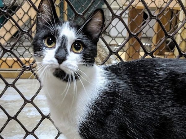 Adopt Me: Scoot can be a little shy