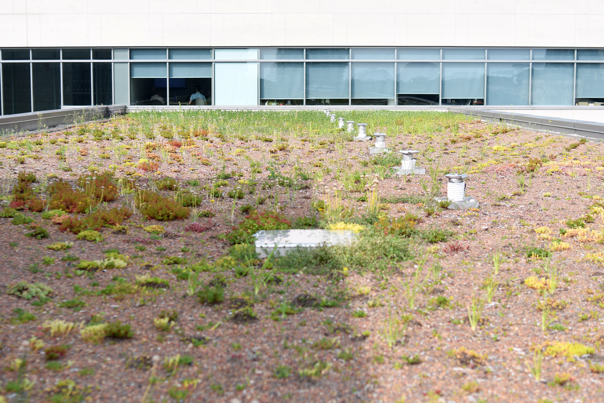 City's living roof gets revamped for low maintenence (6 Photos)