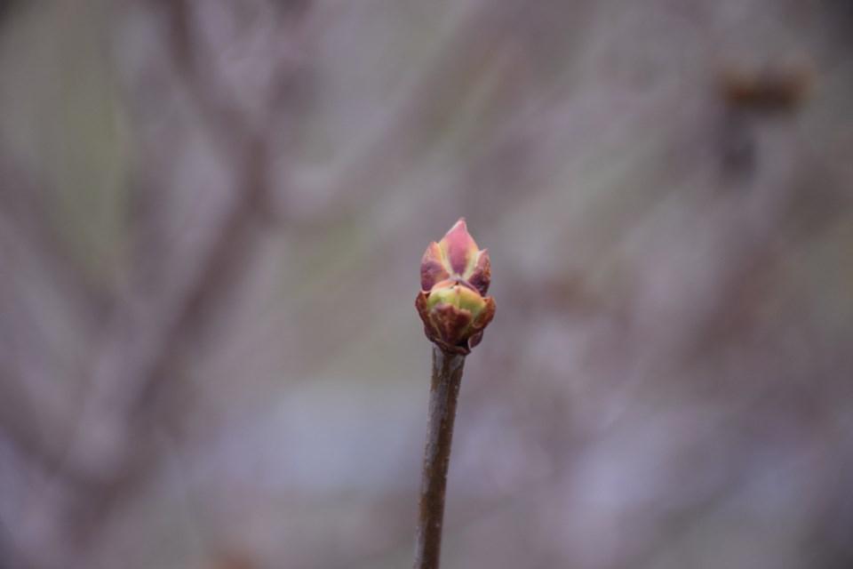 Evidence of impending spring. Rob O'Flanagan/GuelphToday
