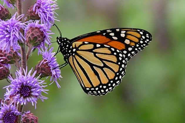 Butterfly release walk to be held to remember loved ones who have passed away
