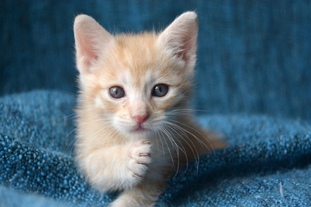 you u0026 39 ve got to be kitten me   cat lounge coming to