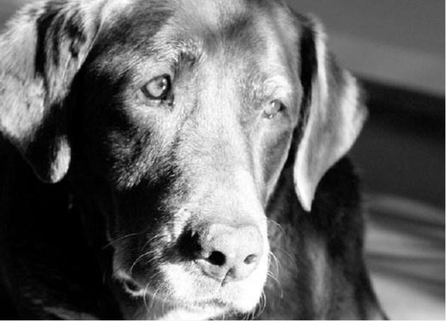 041218-elderdog-ardra cole