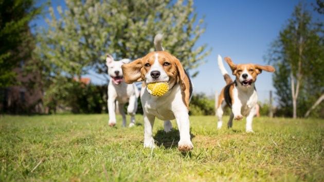 051418-dog park-off leash-AdobeStock_107903002