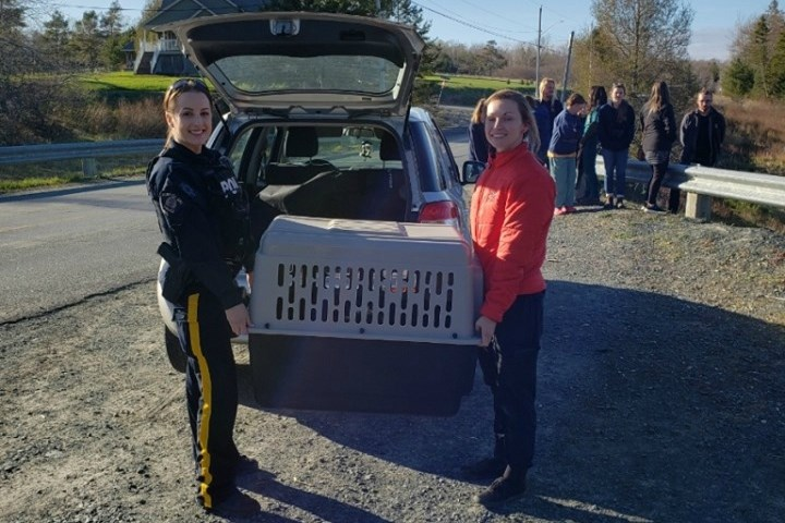 Cst. Kelsea Schofield helps release Nacho the beaver back into the wild (RCMP Nova Scotia/Facebook)