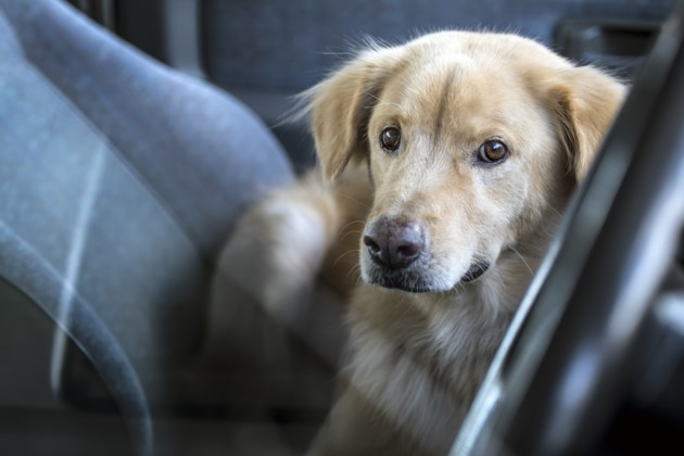 051818-dog in hot car-pet-AdobeStock_112973166
