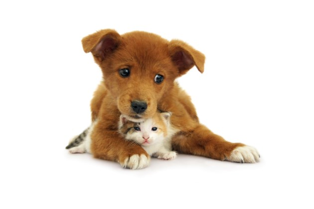 091318-puppy-kitten-AdobeStock_200918910
