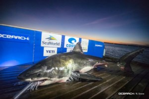OCEARCH planning another Nova Scotia shark-tagging expedition this year