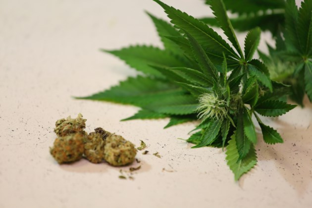 120817-AdobeStock_85482705-marijuana-cannabis-pot-MG