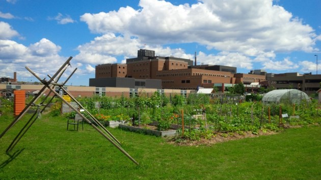 041018-Common-Roots-Urban-Farm-community-garden-2-1024x576