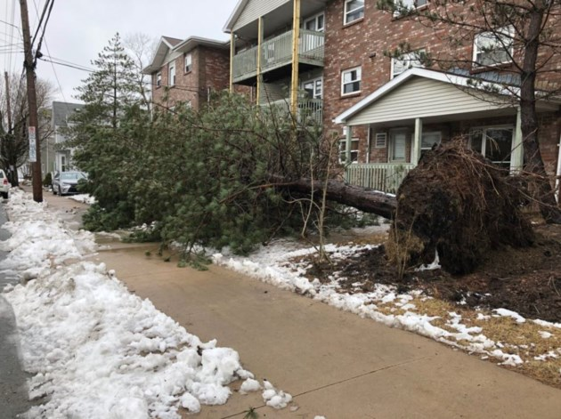 031418-storm damage-uprooted tree