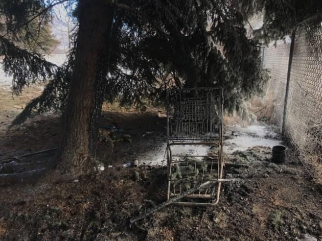 burned-tree