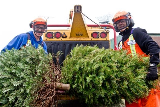 Christmas tree disposal opens January  5 in Ottawa