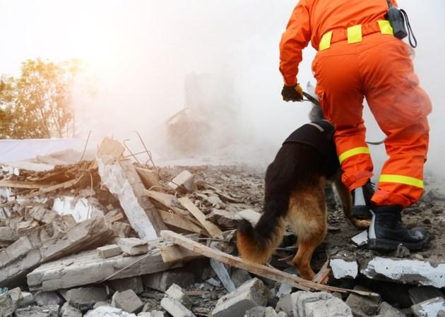 rescue-dog-personnel