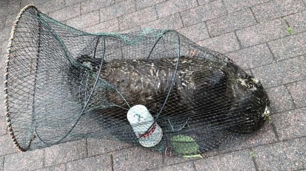 river-otter-1-min