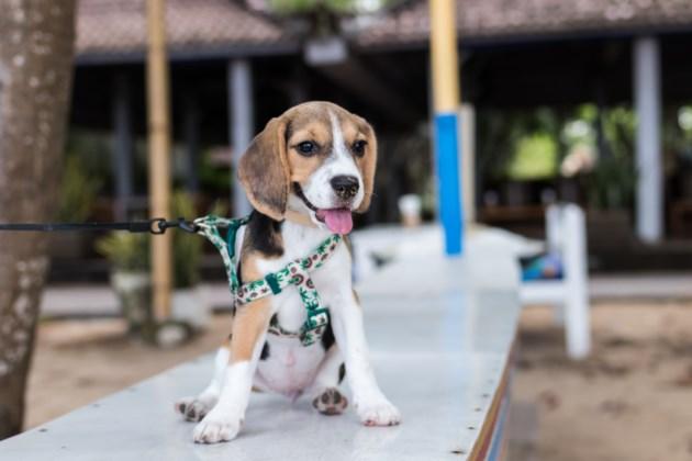 adorable-animal-animal-photography-452772