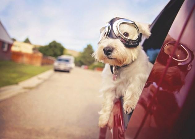 Dogadventurer