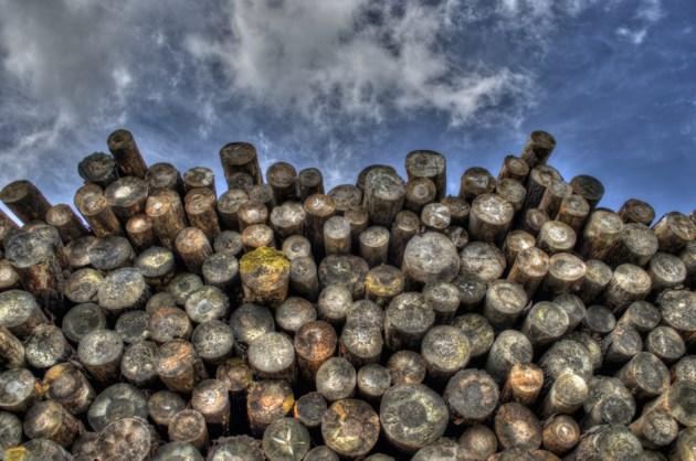 logs-498538_1920