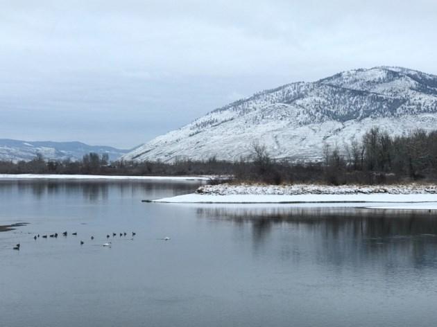 SnowandSwans