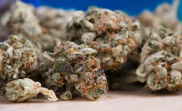 cannabis-2150543_1920