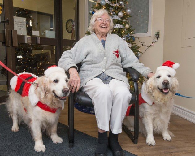 Therapy dogs spreading Christmas cheer at retirement homes (2 photos)