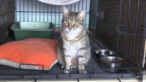 VIDEO: Pets we've met: Pixie (adopted)