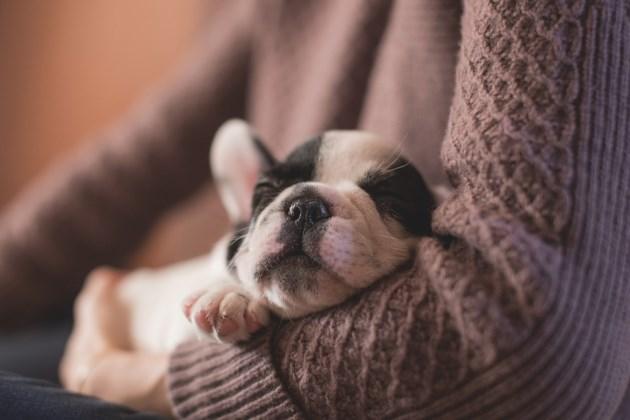 061717-adorable-puppy