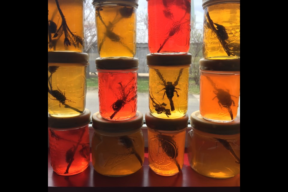 Jennifer Angus speculates that her fictional characters — young Victorian women insect-collectors — would have preserved their specimens in jelly. These jam jars are in the window at the Annapolis Royal Historic Gardens as part of Angus's exhibit Lookabout. The exhibit starts at ARTsPLACE, open every day except Monday. (Jennifer Angus)