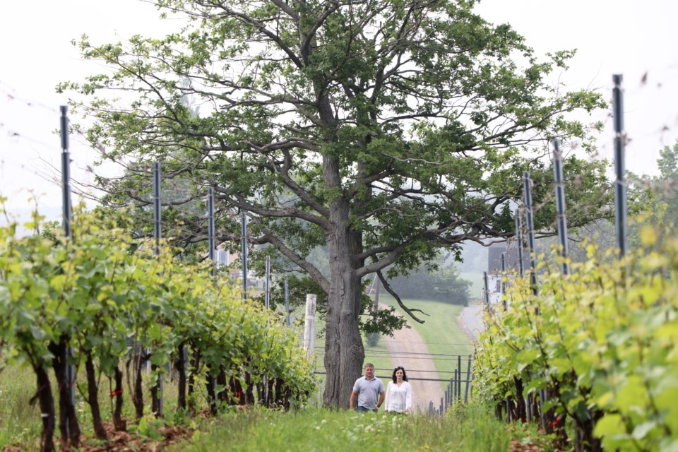 Jocelyn and Michael Lightfoot walk through the vineyards at Lightfoot & Wolfville winery. The new $6-million project, located just on the eastern edge of the town, is expected to open mid-July. (ERIC WYNNE / Local Xpress)