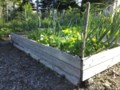 Growing Food With Greg: Are raised beds really the best choice?