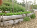 Growing Food With Greg: Borders, boxes and beds, oh my!