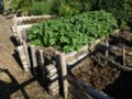 Growing Food with Greg: Potatoes — the nutritious peons of produce