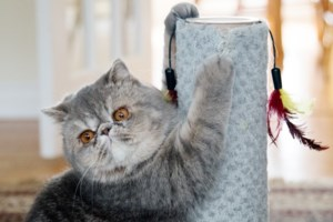 PET CORNER: It's time the declawing of cats was outlawed in Nova Scotia