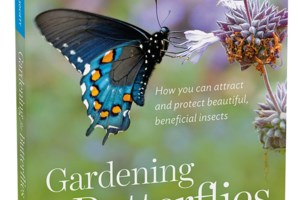 That Blooming Gardener: Great reads for too-hot-to-garden days