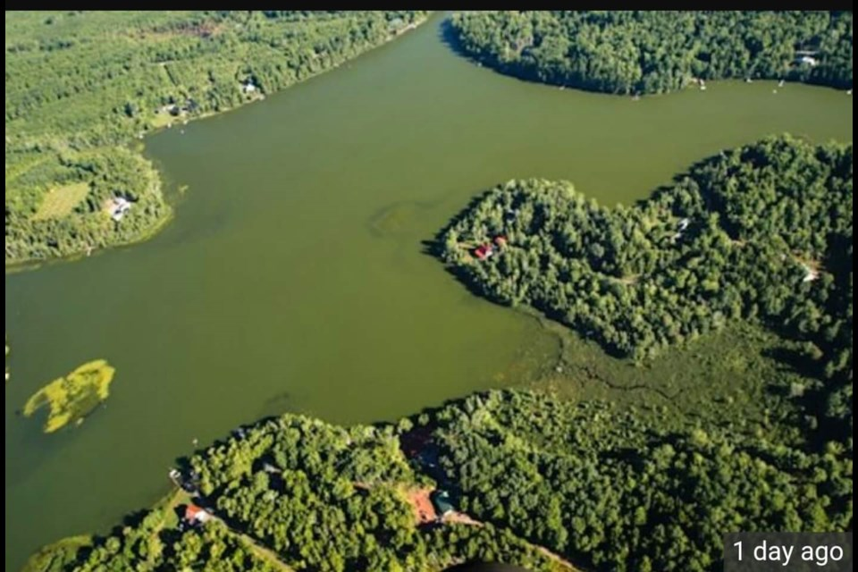 A recent aerial view of algae-infested Mattatall Lake.