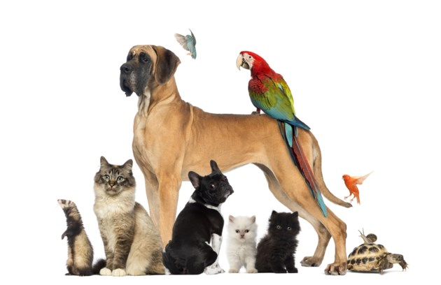 group of pets stock