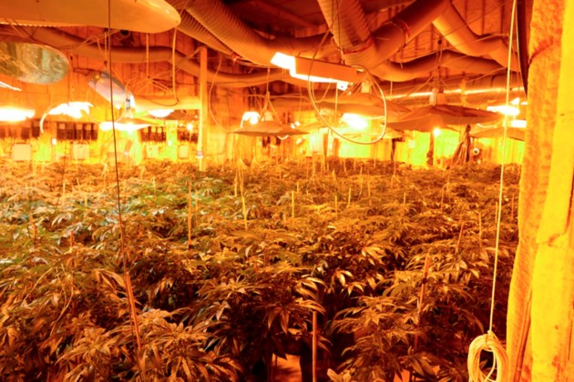 2019 01 29 cannabis grow exceed licence
