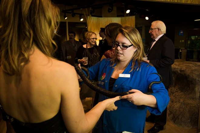 Bluecoat Brittany Rouleau shows a snake to a Money in Motion employee at a company event.