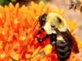 Honeybee killer can have practical applications