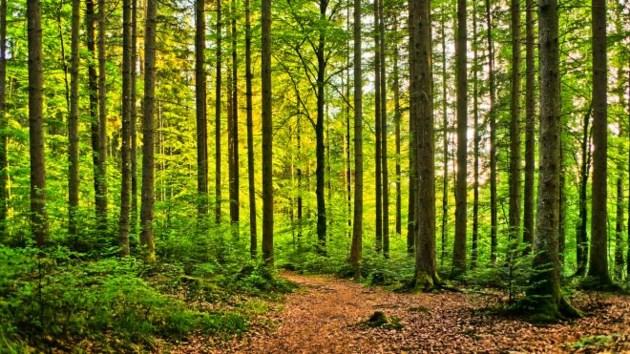 wood_scholarship