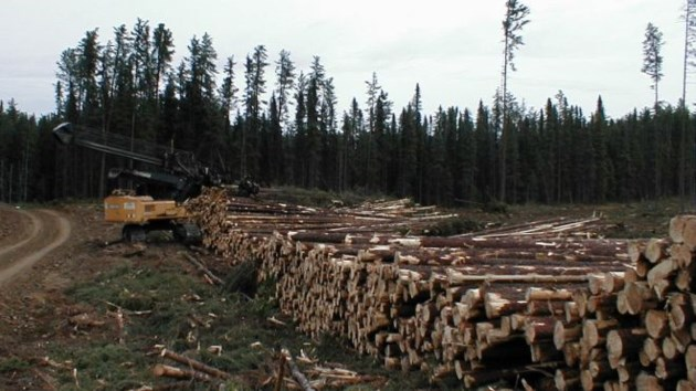 lumber_donation_cropped