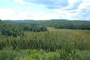 Stop logging Algonquin Park says lobby group