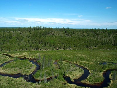 Muskeg_Cropped