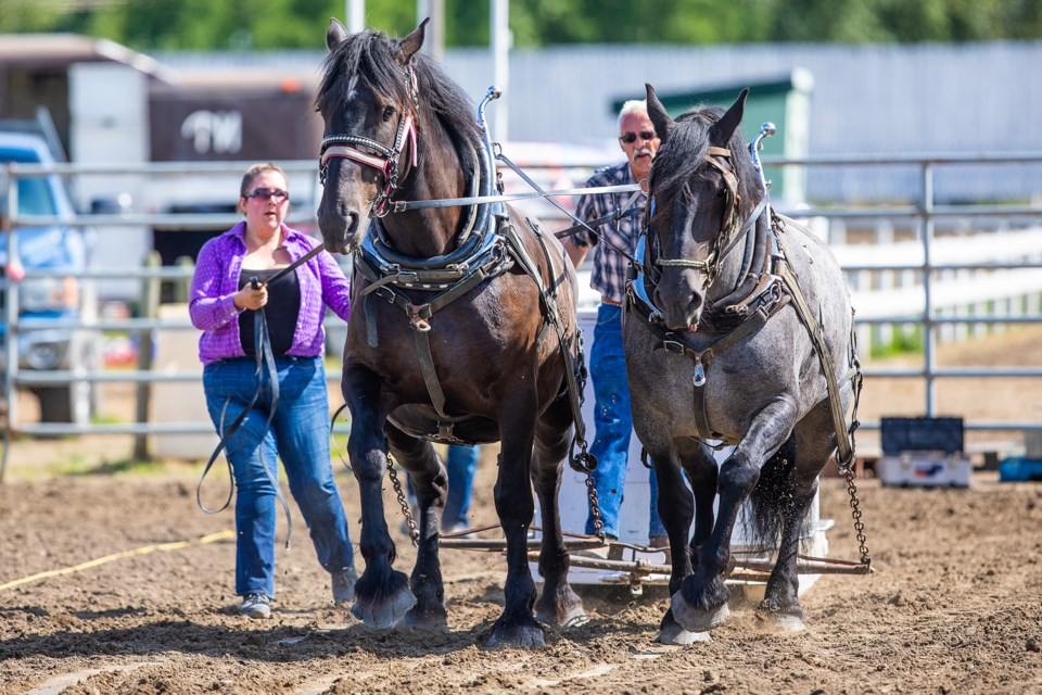 Holly and Stuart Lyster compete with their horses Ike, left, and Omar in the Heavy Horse Pull demonstration during the 2019 Priddis-Millarville Fair on Aug. 17. (BRENT CALVER/Western Wheel)