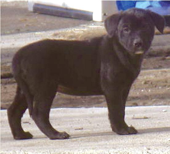 Okotoks woman flipping puppies for profit - OkotoksToday ca