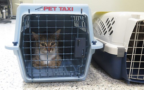 Cats dropped off at the Ottawa Humane Society by a staff member of a pest control company. Photo/ OHS