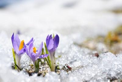 2018-03-22-winter-into-spring-AB