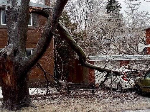 2018-04-16-fallen-tree-AB